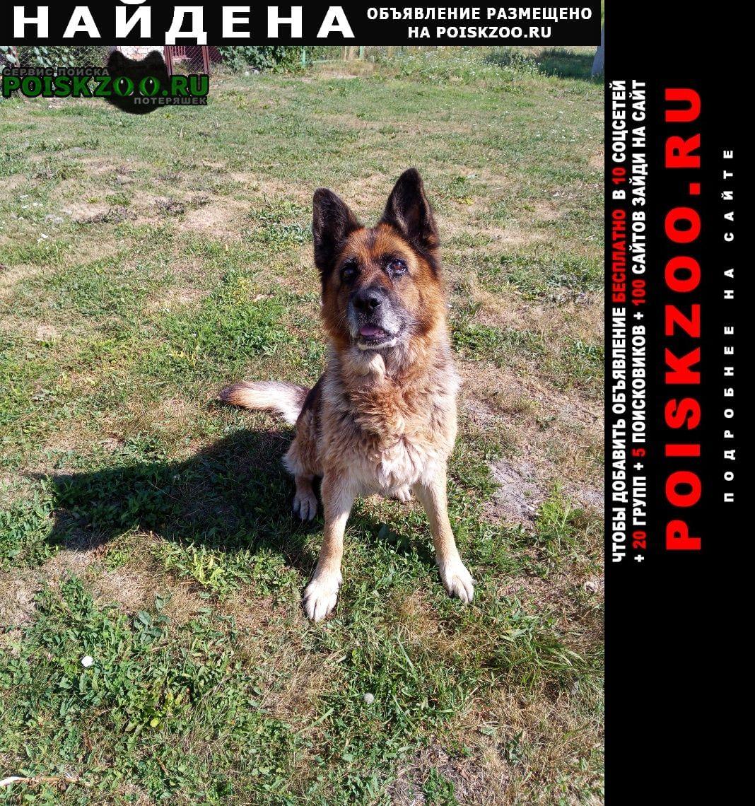 Найдена собака Тереньга