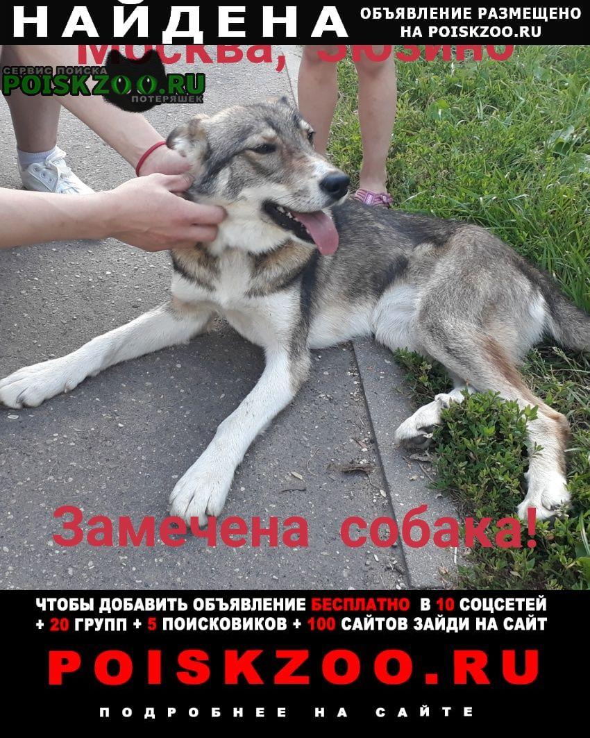 Найдена собака замечена зюзино Москва