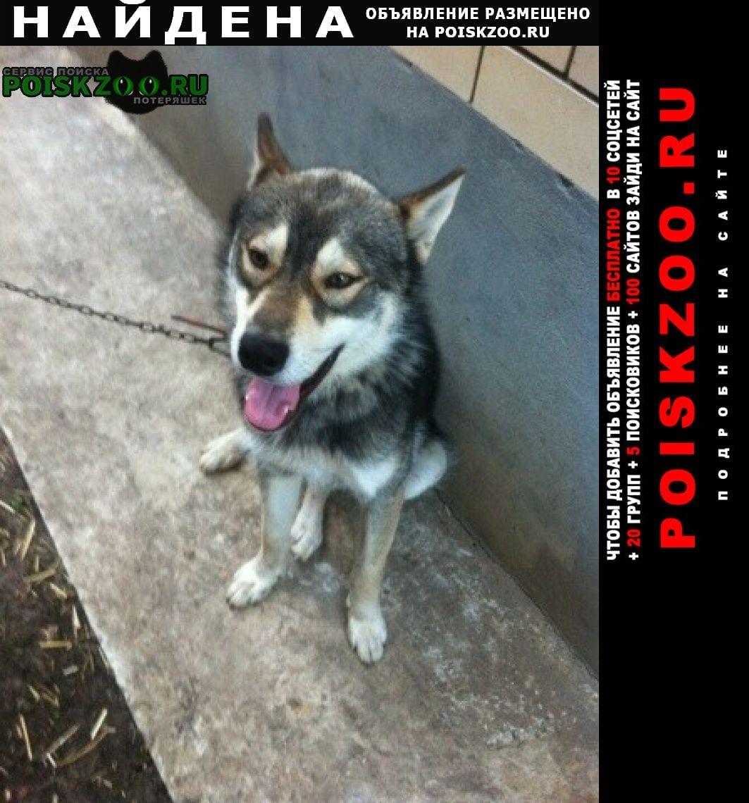 Найдена собака лайка в ст. новотитаровская Краснодар