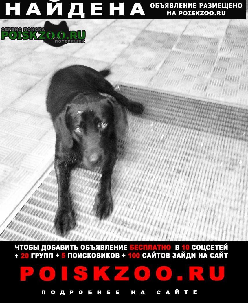 Найдена собака конобеево. чёрный пёс с ошейником Воскресенск