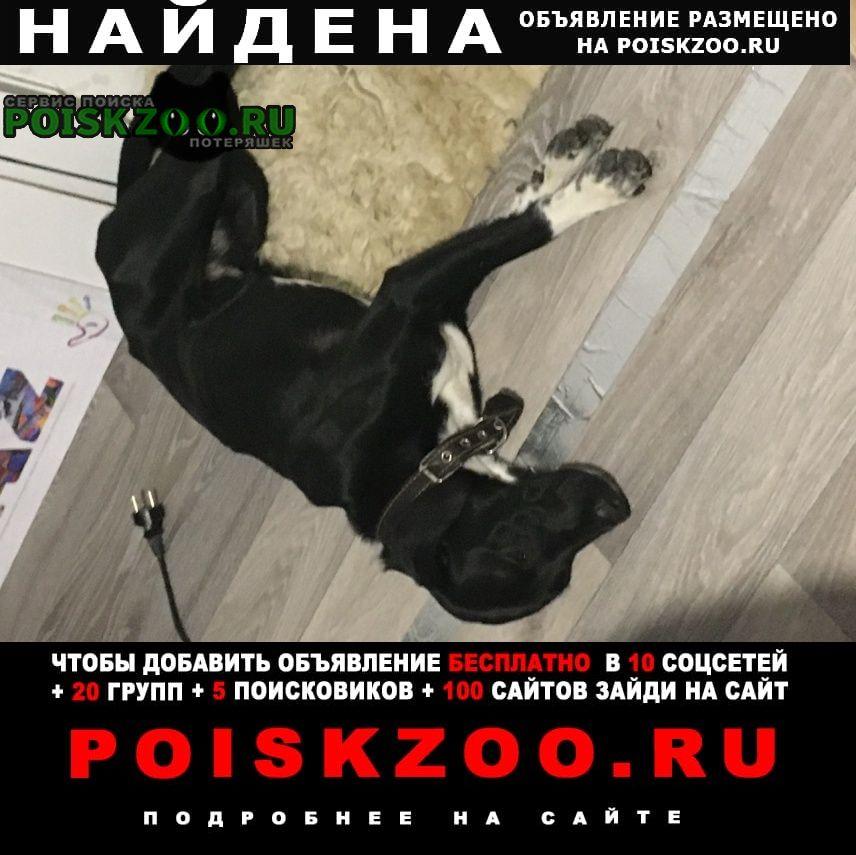 Найдена собака в кп княжево собачка, бегает и с Бор