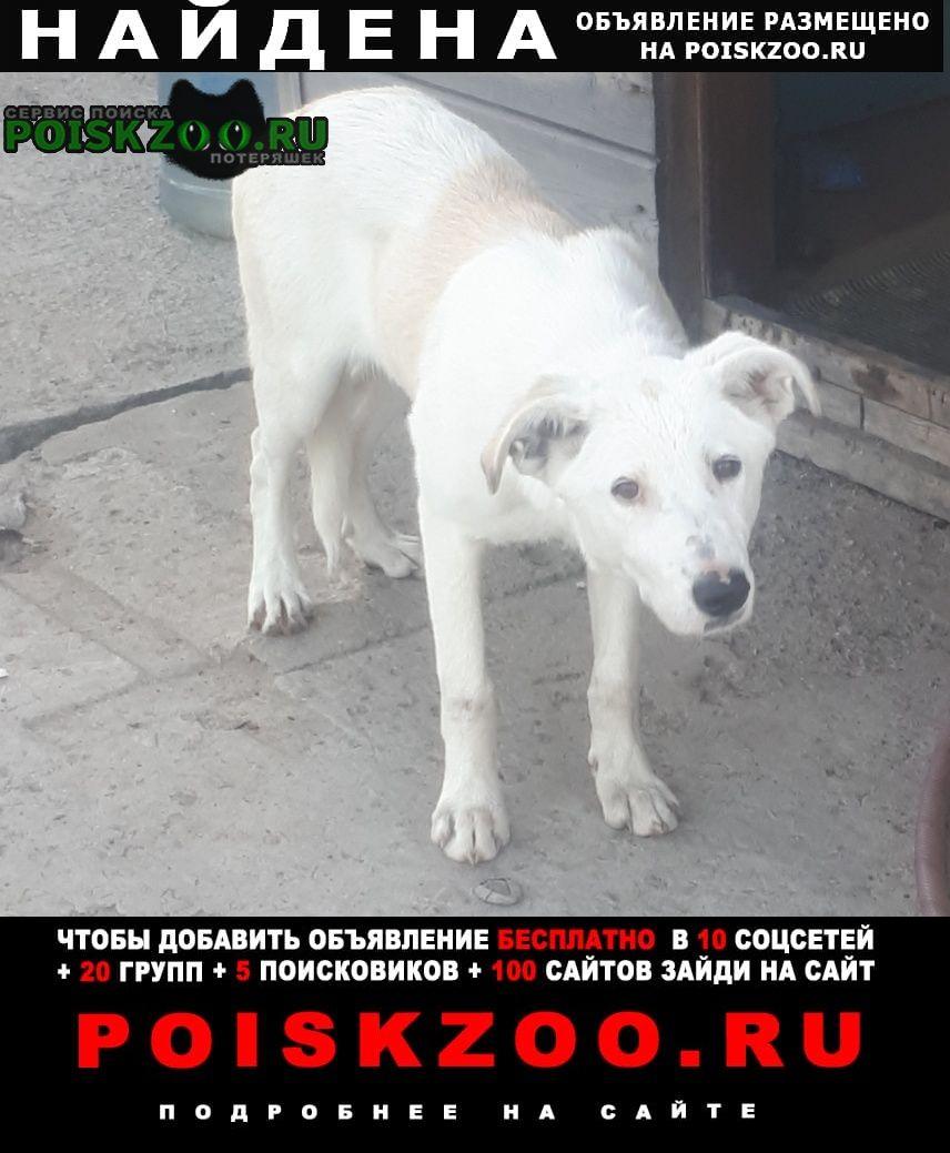 Найдена собака белый щенок, девочка. Раменское