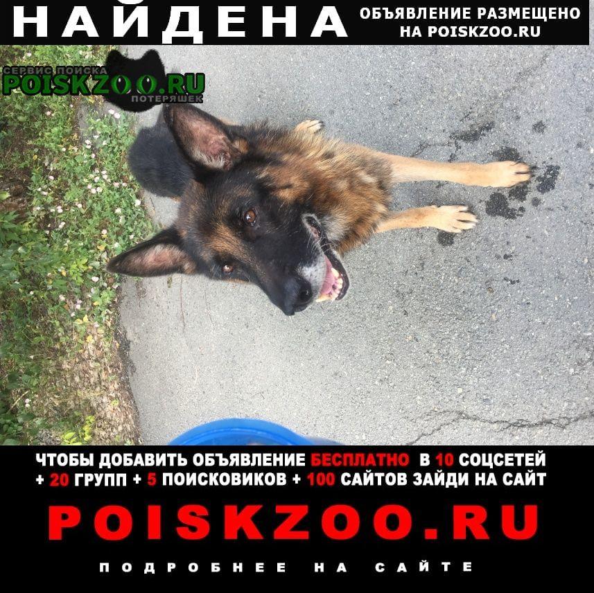 Найдена собака кобель немецкой овчарки Челябинск