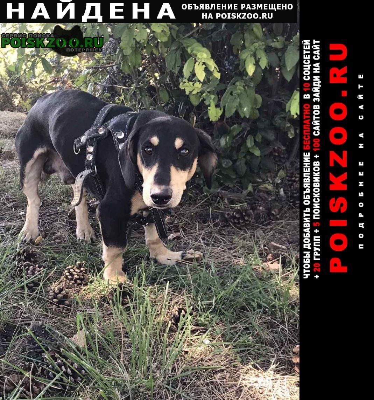 Найдена собака очень ждёт хозяина Симферополь