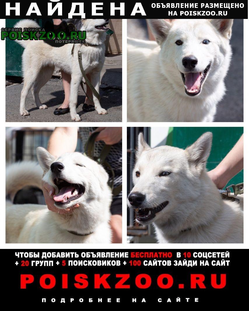 Найдена собака белый пёс, хаски метис Екатеринбург