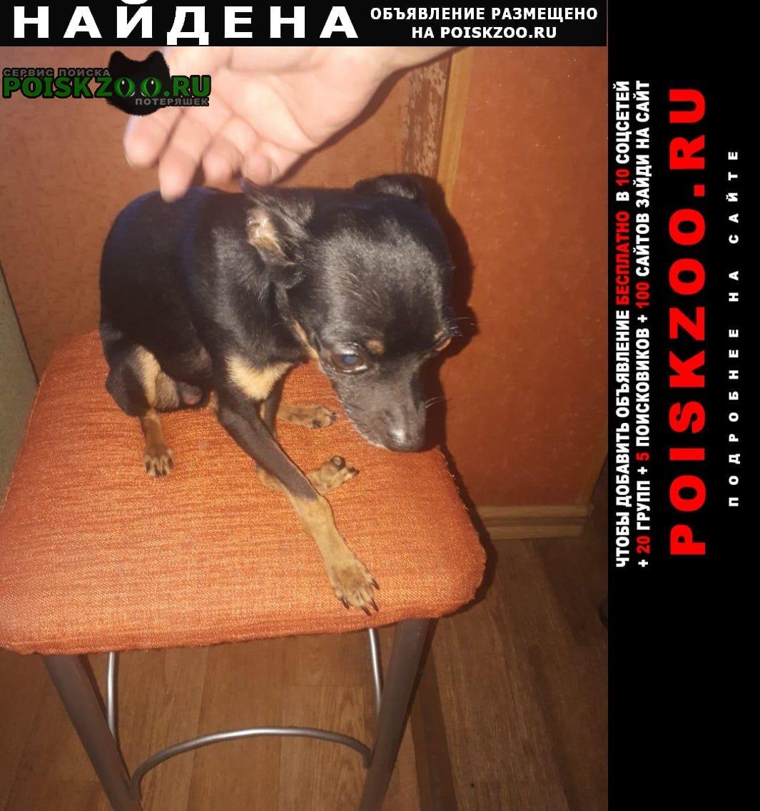 Найдена собака ищем хозяина Ангарск
