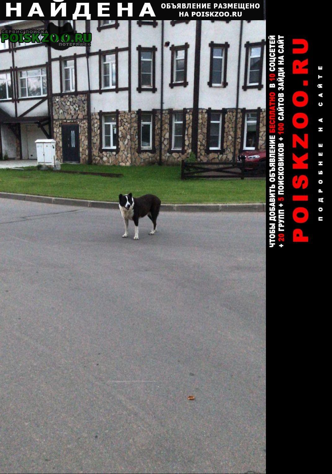 Найдена собака Лесной Городок