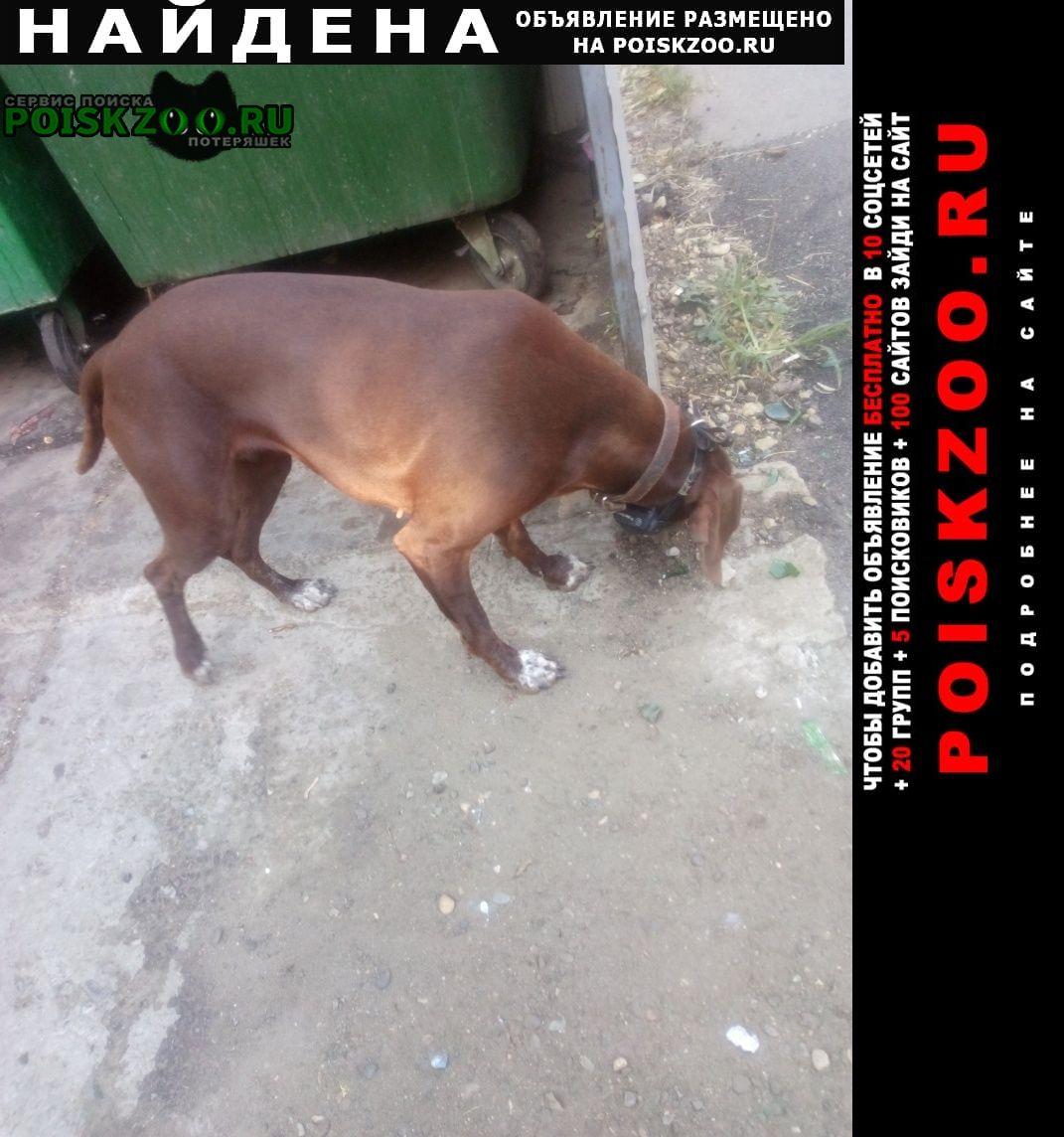 Найдена собака район гидрострой Краснодар