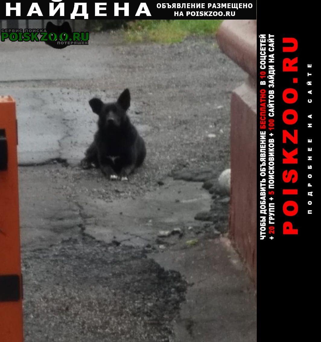 Найдена собака черная, с белым пятном на груди Москва