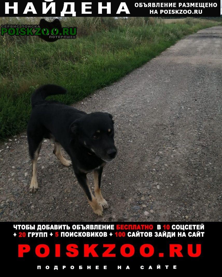 Найдена собака Ожерелье