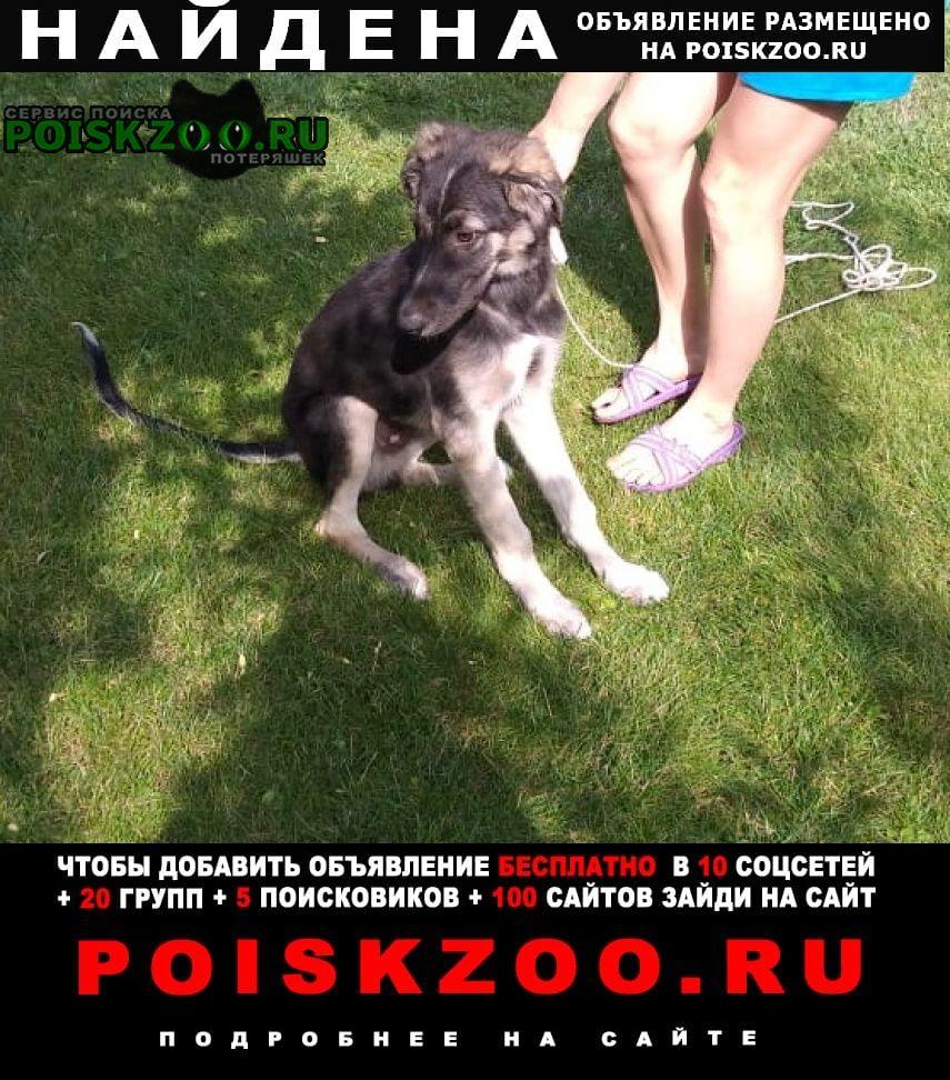 Найдена собака Волгоград