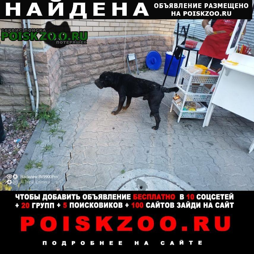 Найдена собака, ул. инструментальная 13 Таганрог