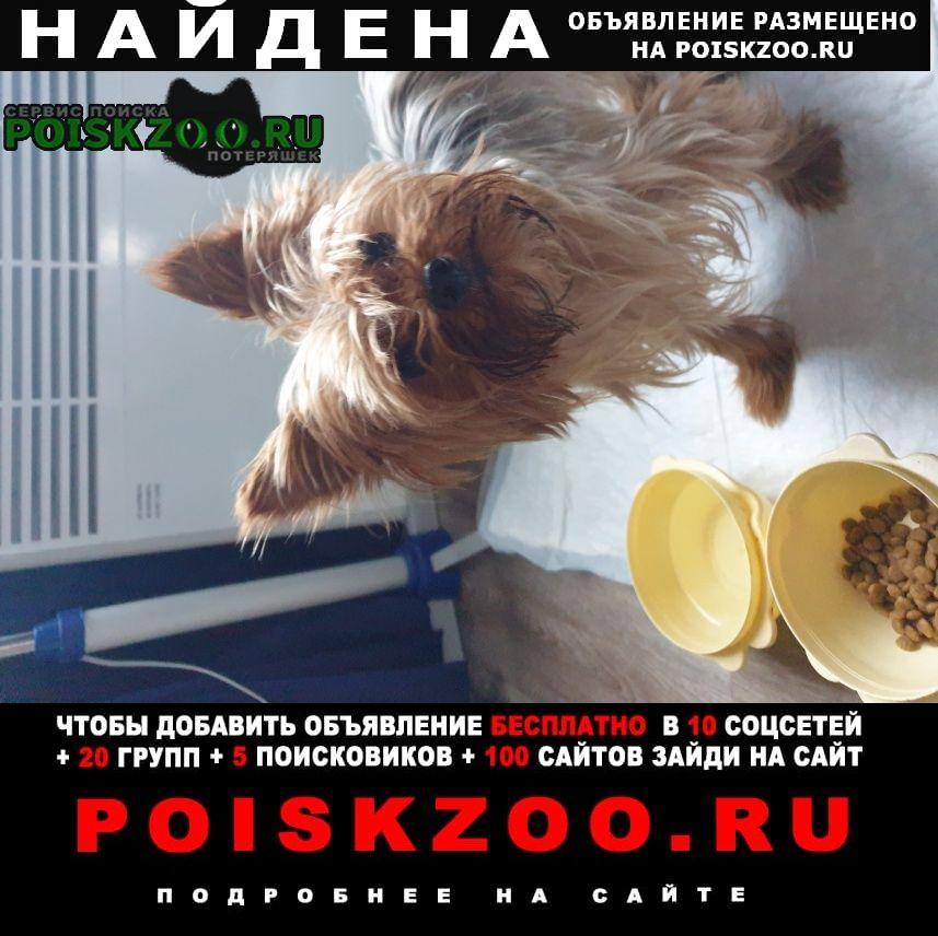 Найдена собака йорк(кабель) Харьков