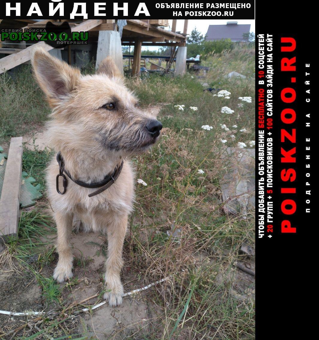 Найдена собака Новая Усмань