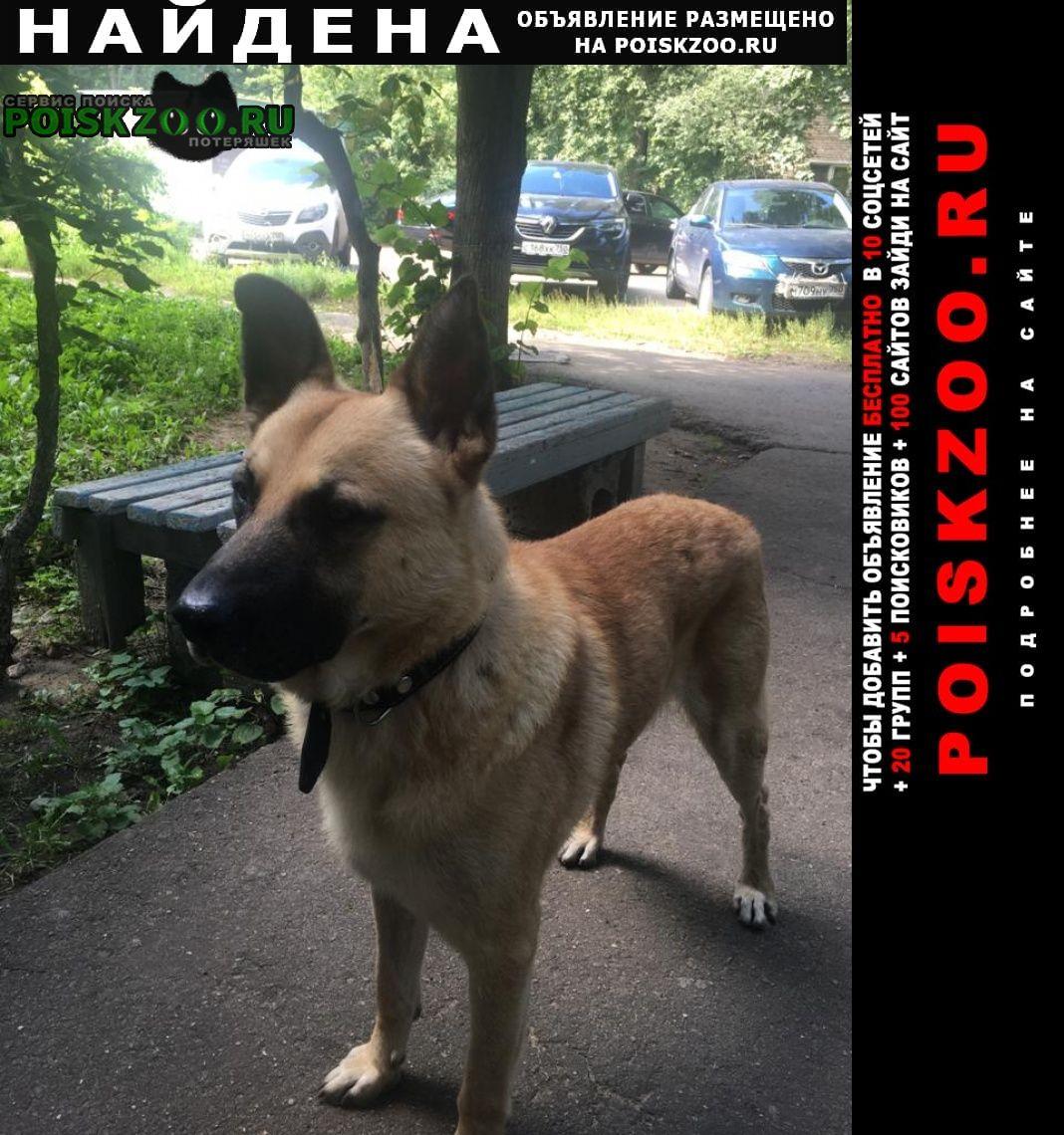 Найдена собака кооперативная 16 Королев
