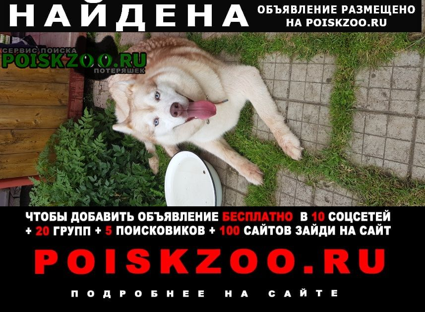 Найдена собака Александров