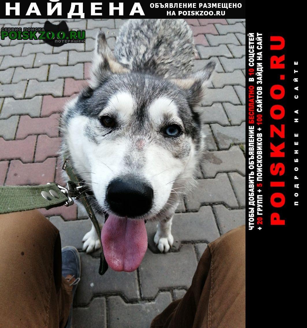 Найдена собака кто потерял собакена? Красноярск