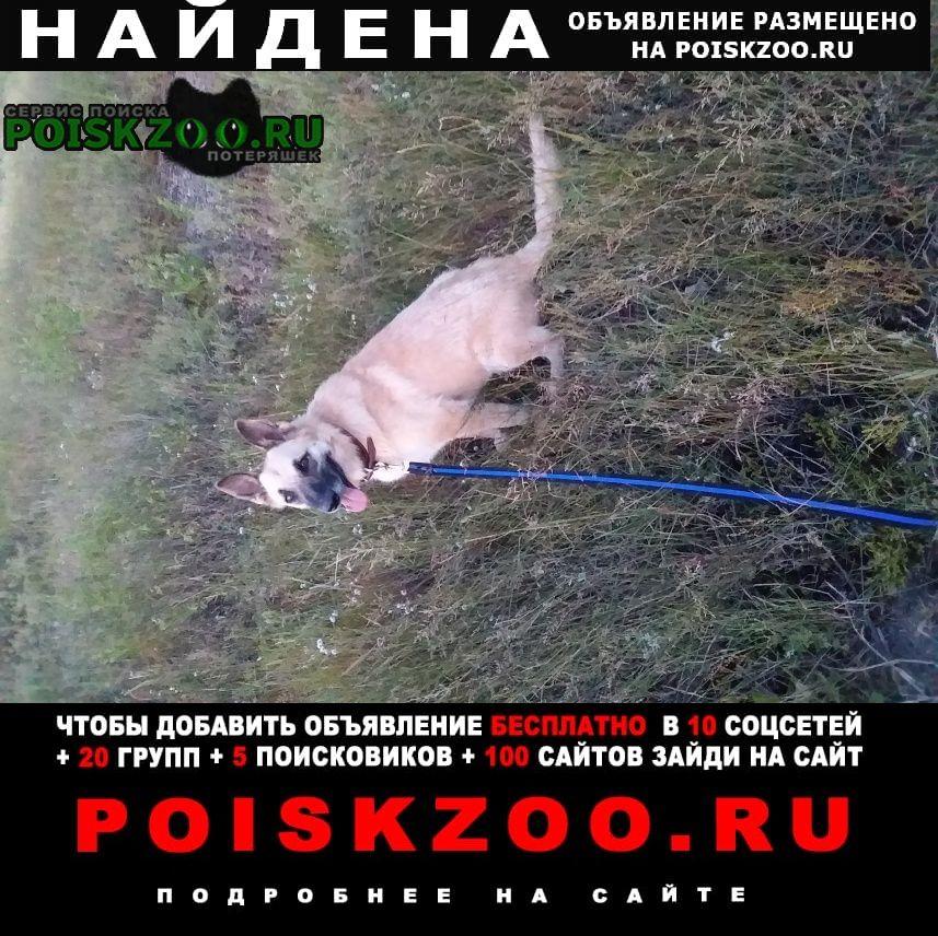 Найдена собака Алексин