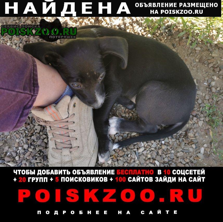 Найдена собака щенок Коломна