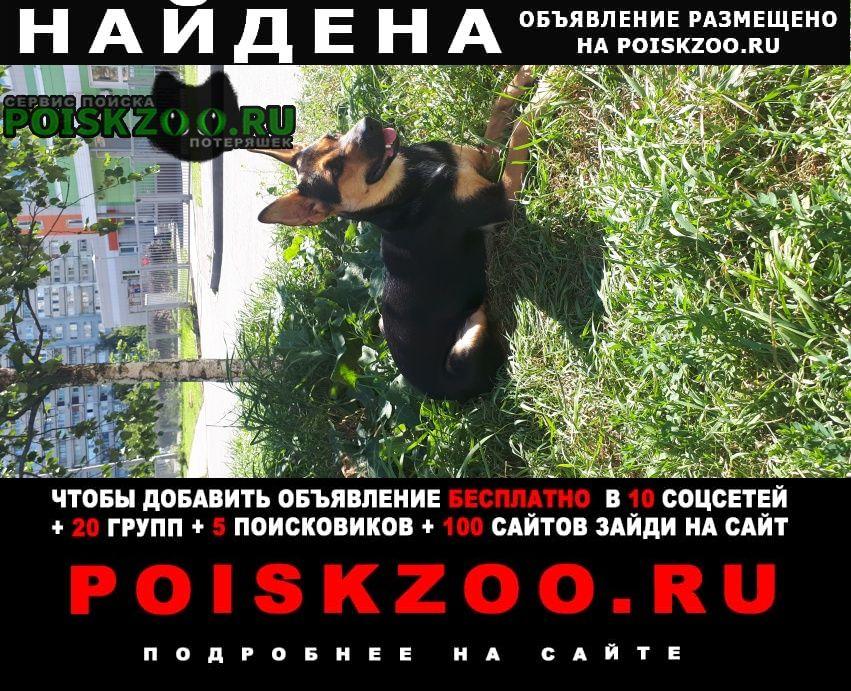 Найдена собака Мытищи