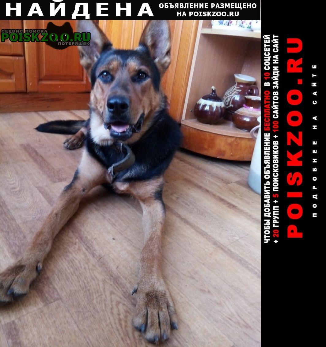 Найдена собака Брянск