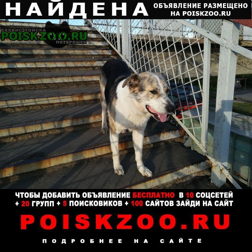Найдена собака на ж д платформе манихино Истра