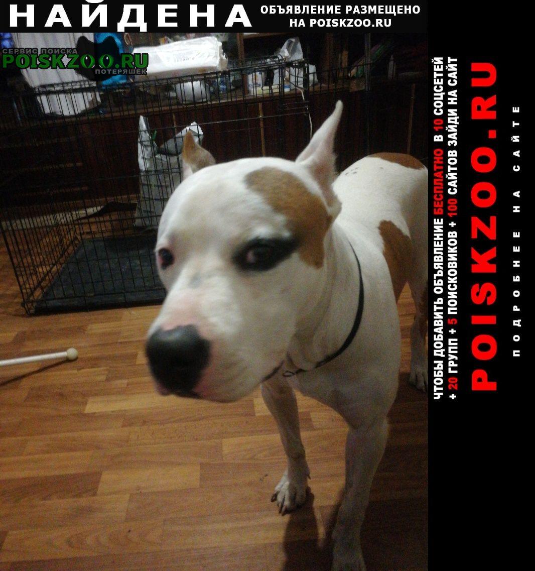 Найдена собака в пролетарском районе Тула