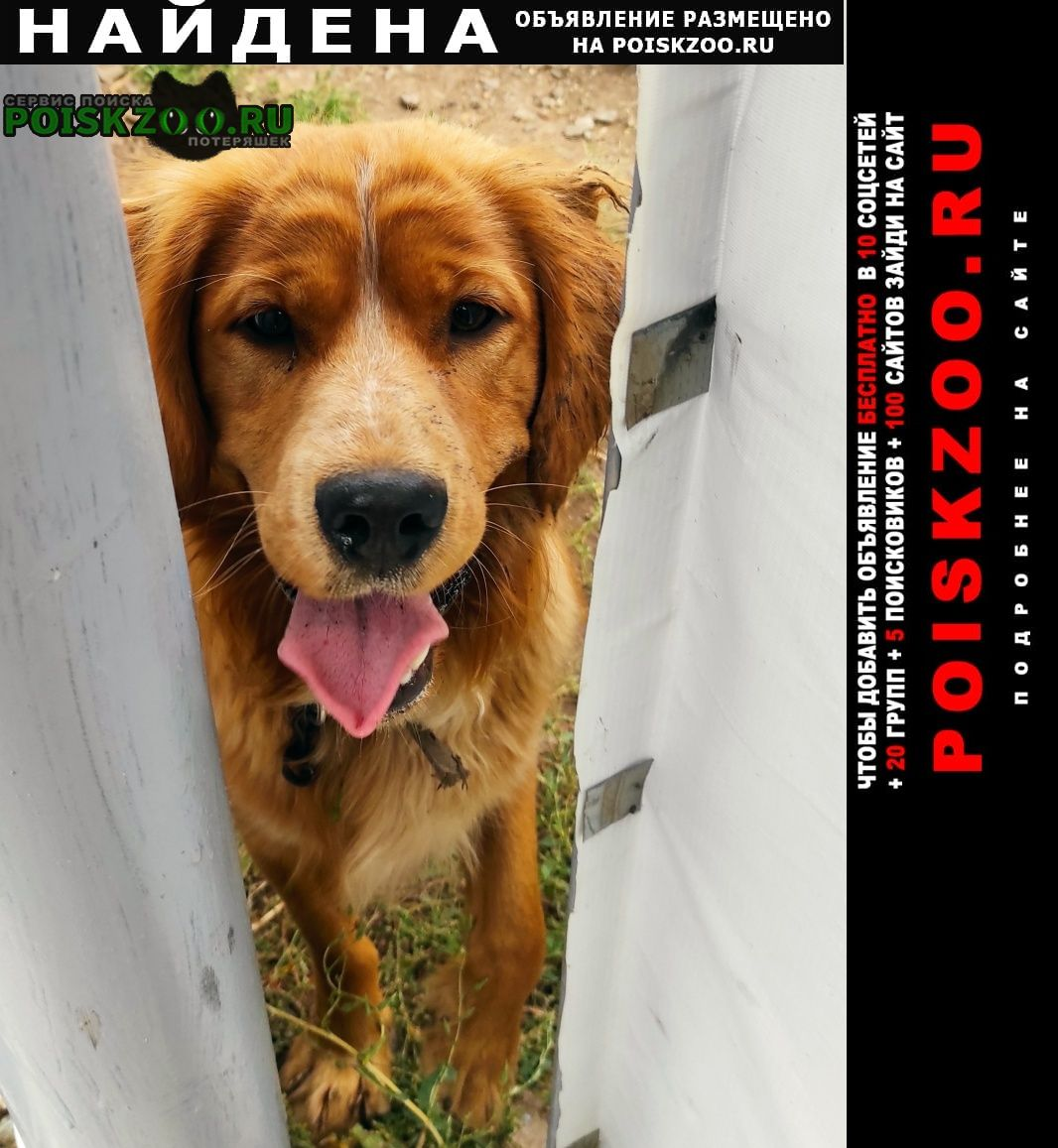Найдена собака Оренбург