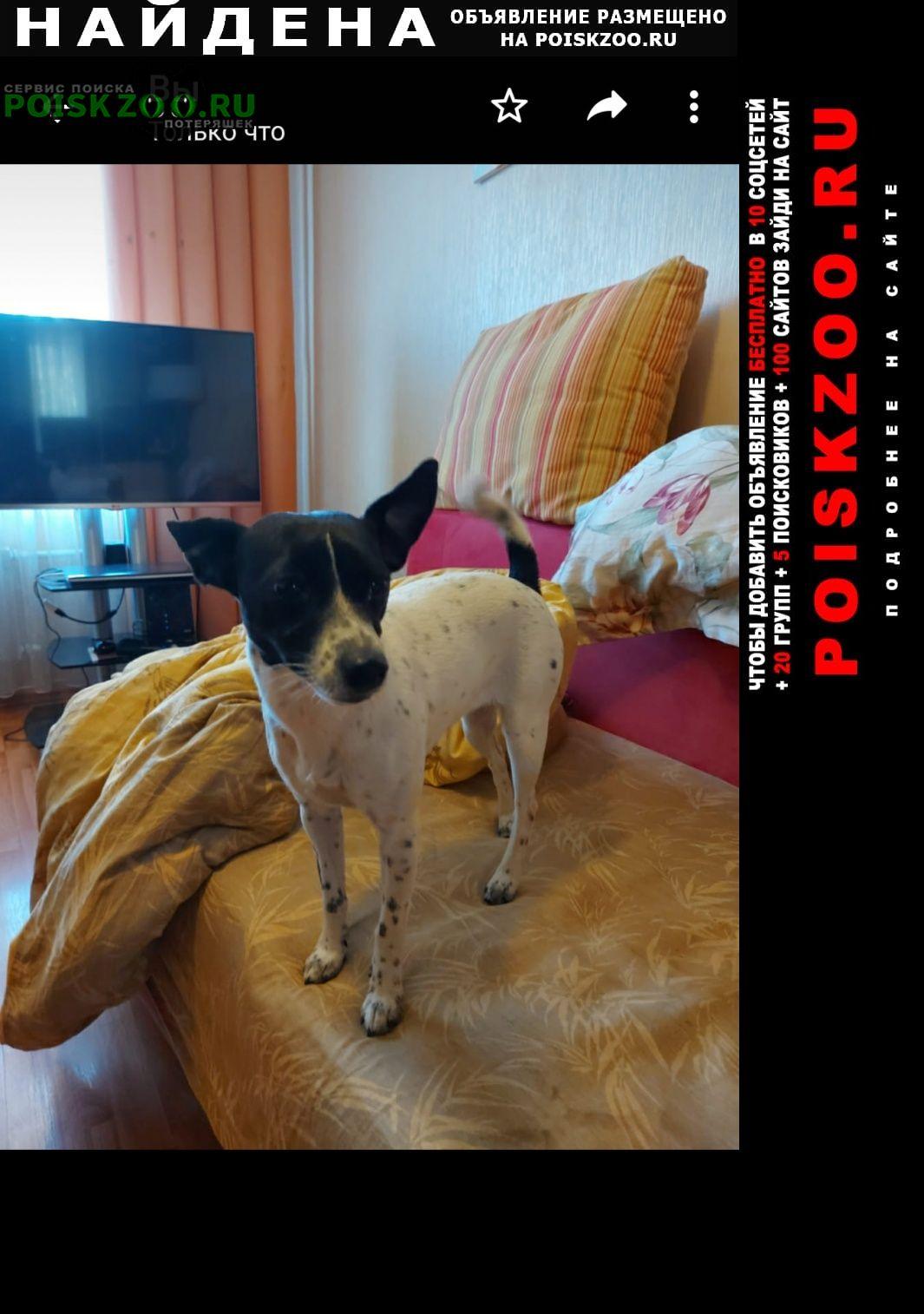 Найдена собака черно-белая девочка Мытищи