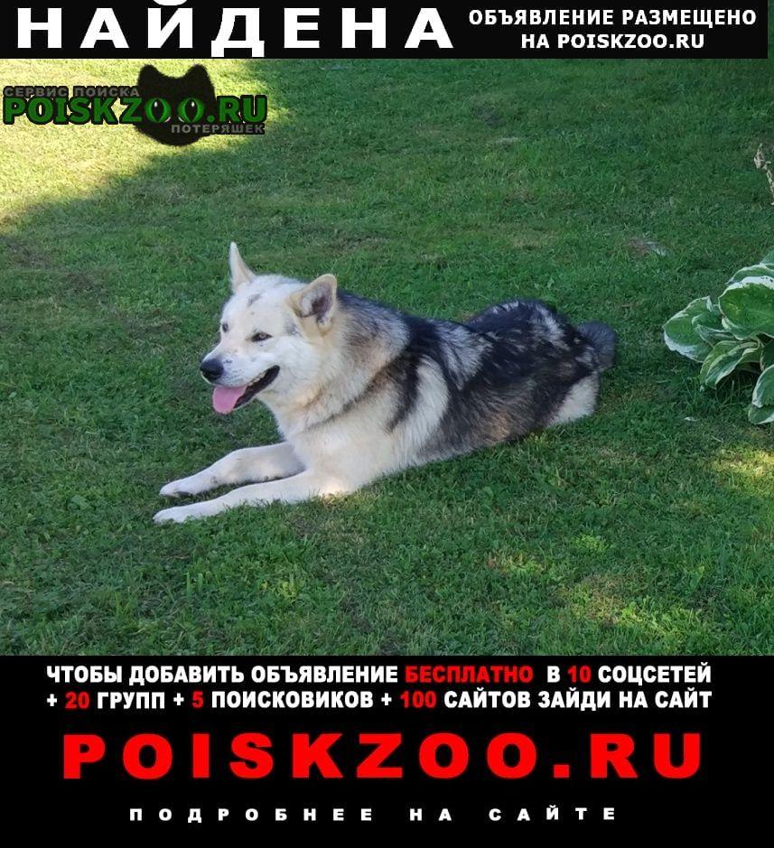 Найдена собака прибилась Приозерск
