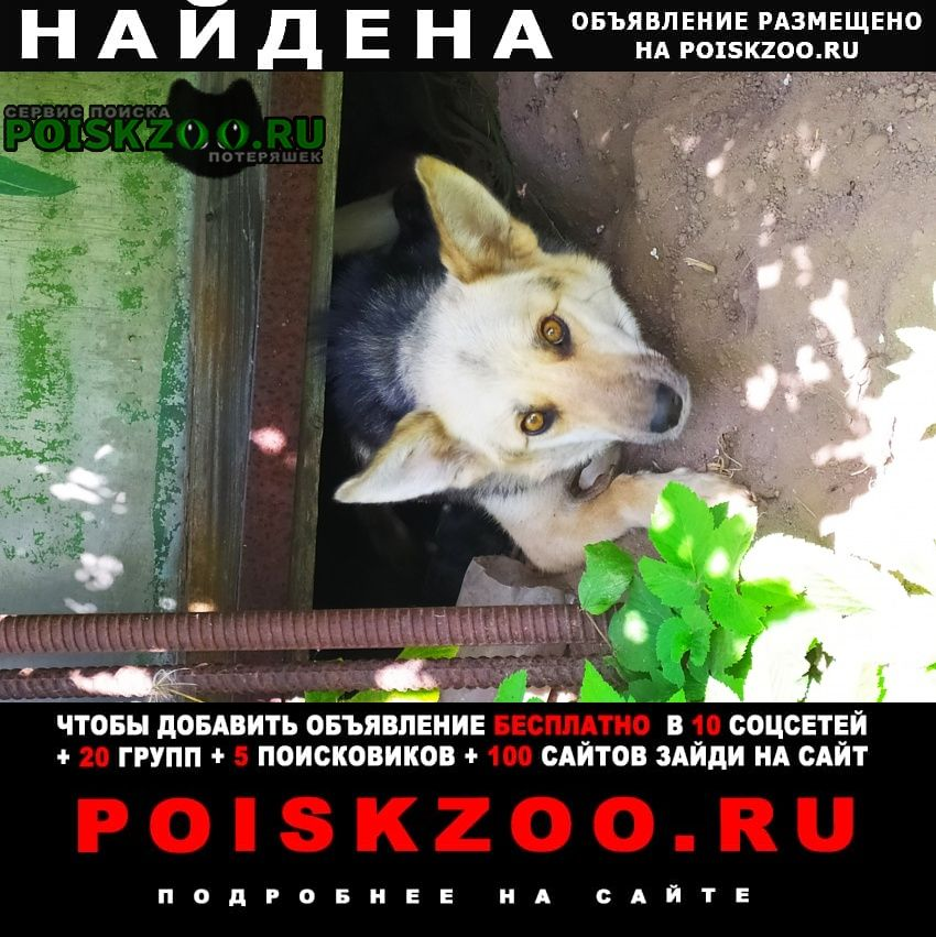 Найдена собака девочка Бронницы