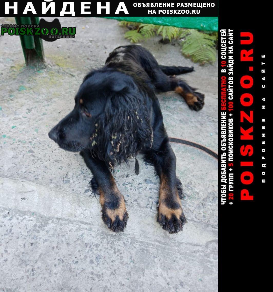 Найдена собака Старый Оскол