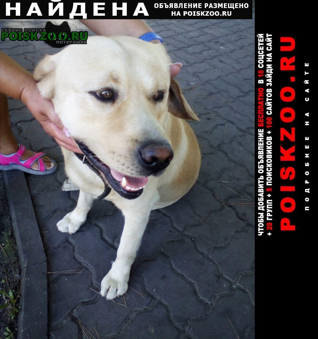 Найдена собака находится возле администрации Анапа