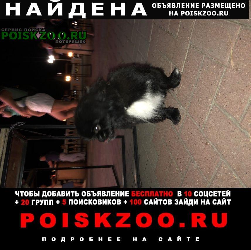 Найдена собака чёрный пекинес Геленджик