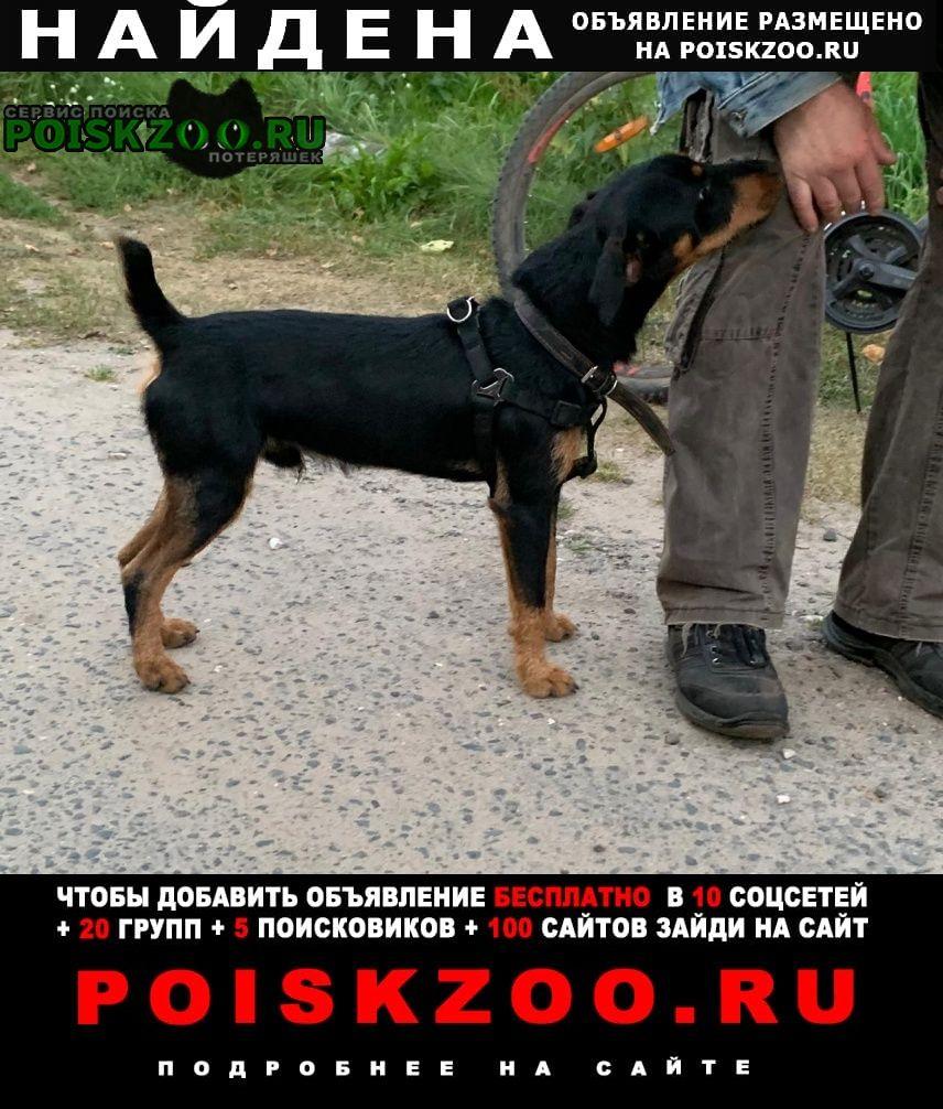 Найдена собака молодой пёс. хозяева отзовитесь Орехово-Зуево