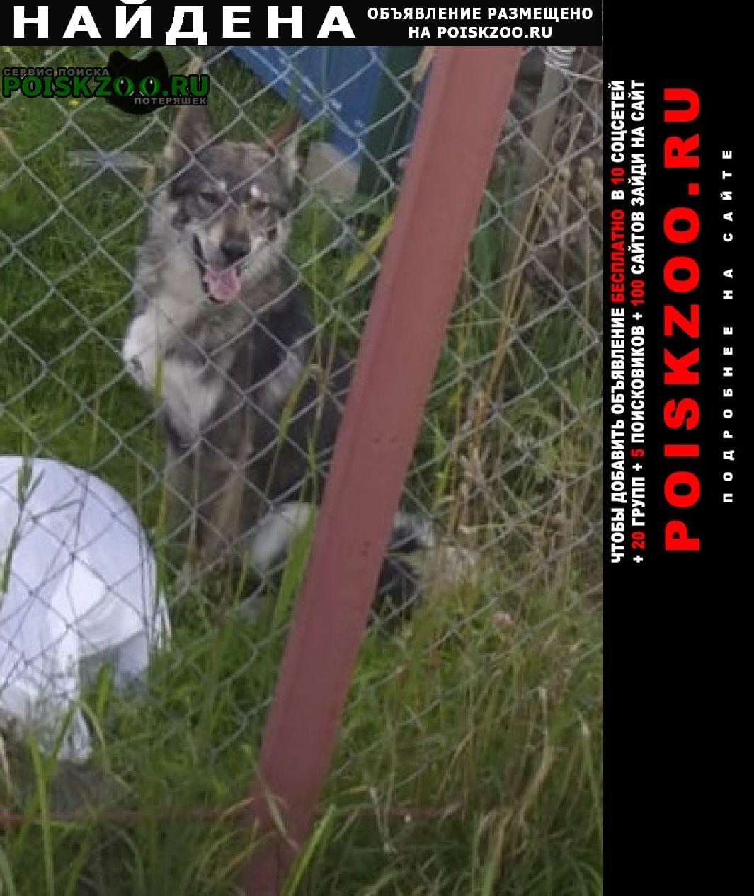 Найдена собака кабель лайка серый Клин