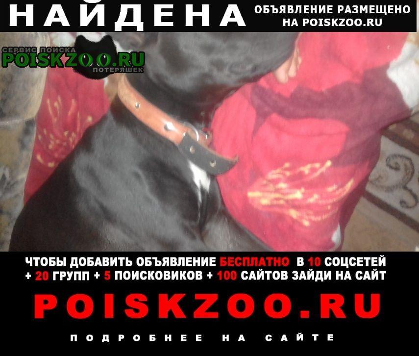 Найдена собака район центра Ставрополь