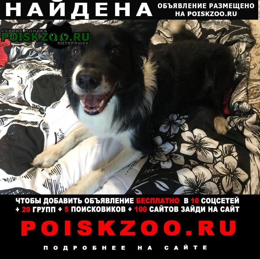 Найдена собака в районе речного вокзала Москва