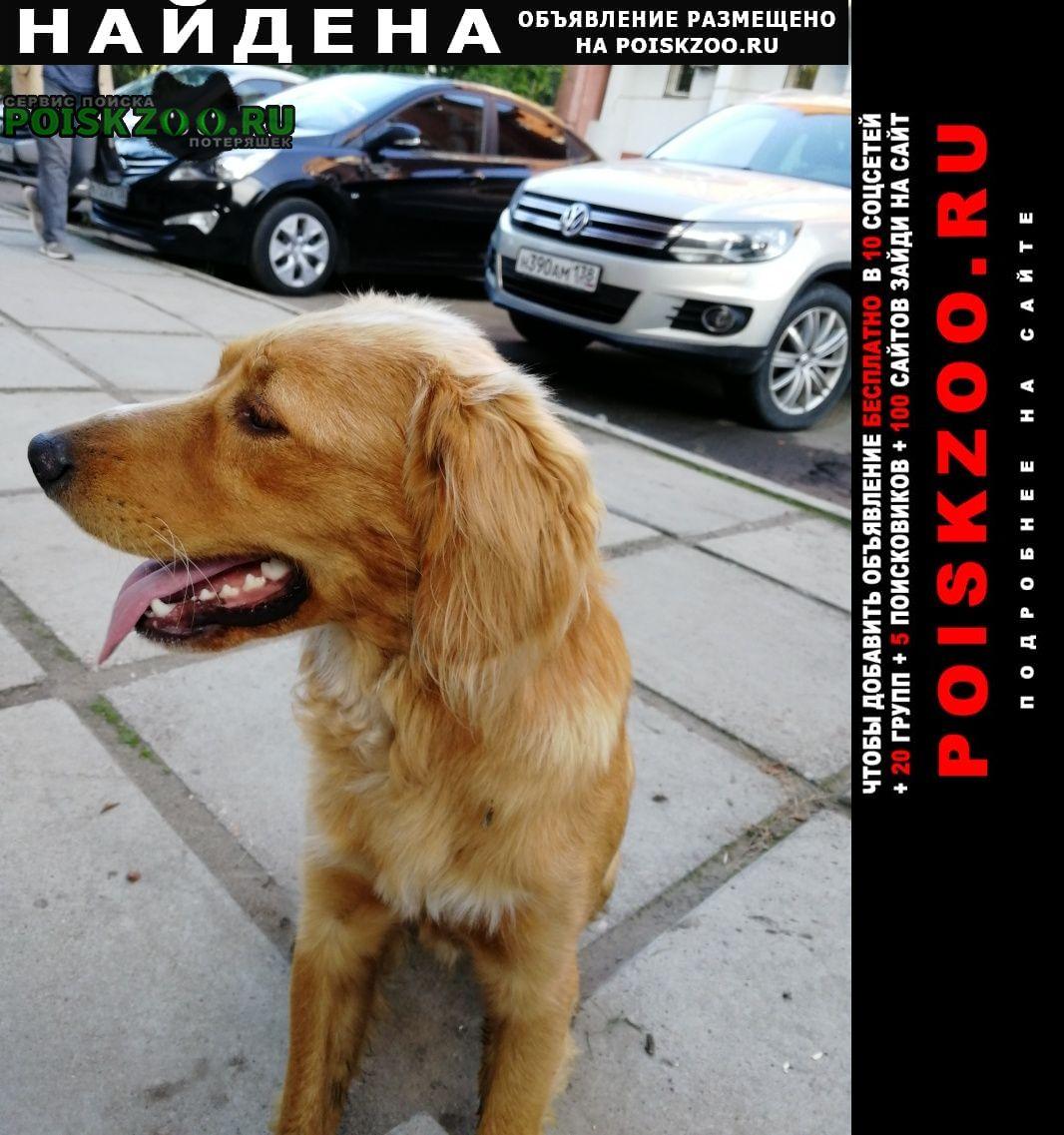 Найдена собака молодой кобель Иркутск