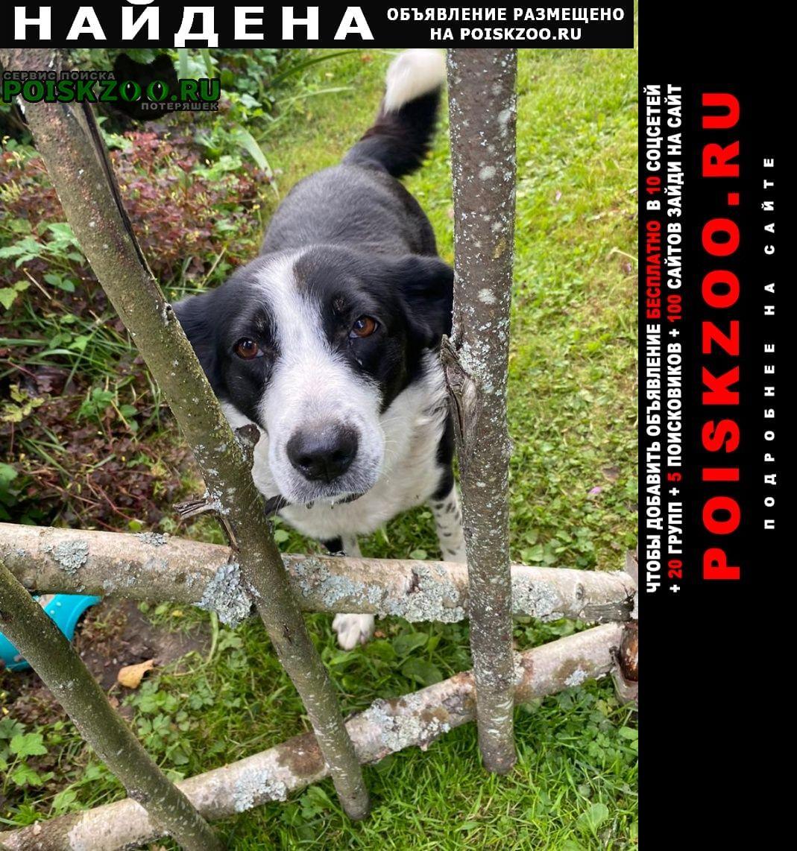 Найдена собака в нском районе Угра