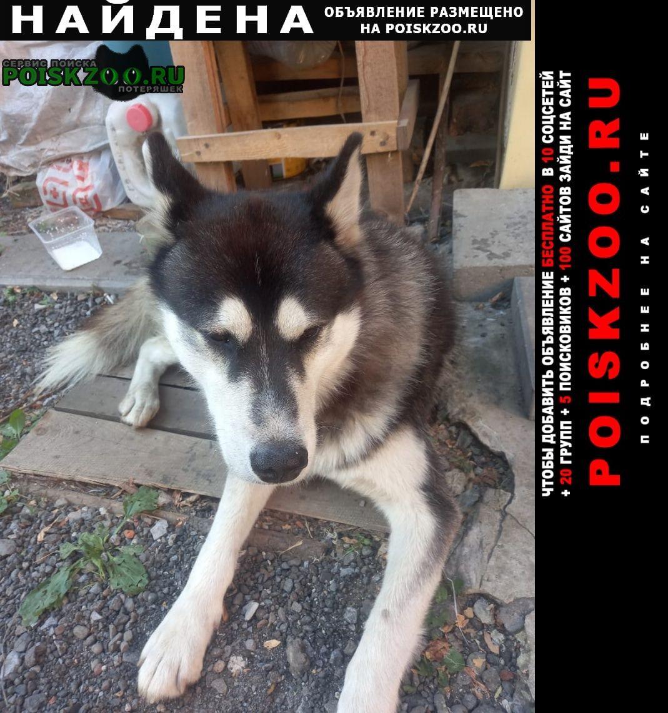 Найдена собака прибился во дворе хаски Ростов-на-Дону