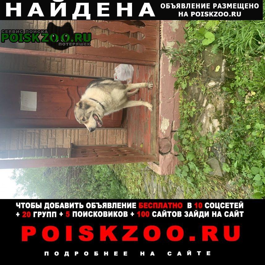Найдена собака алабай сука Чехов