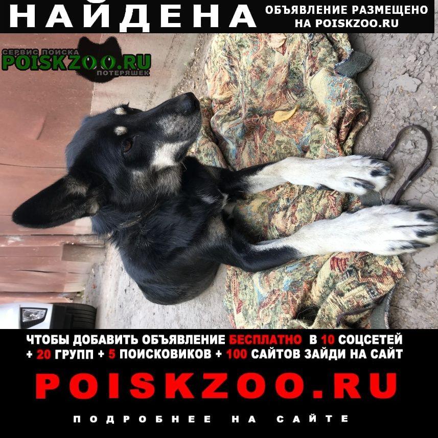 Найдена собака Йошкар-Ола