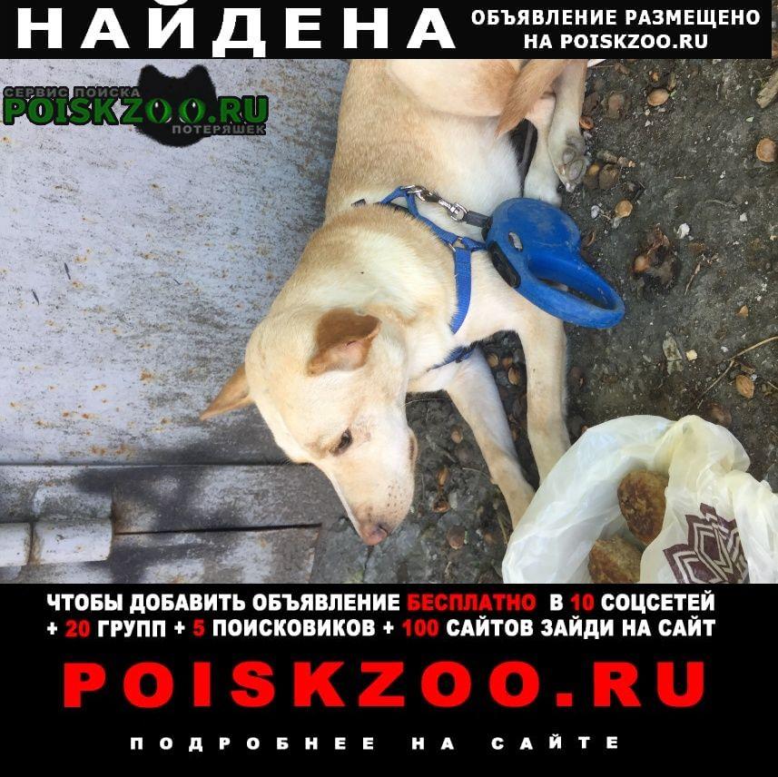Найдена собака чья потеряшка Ростов-на-Дону