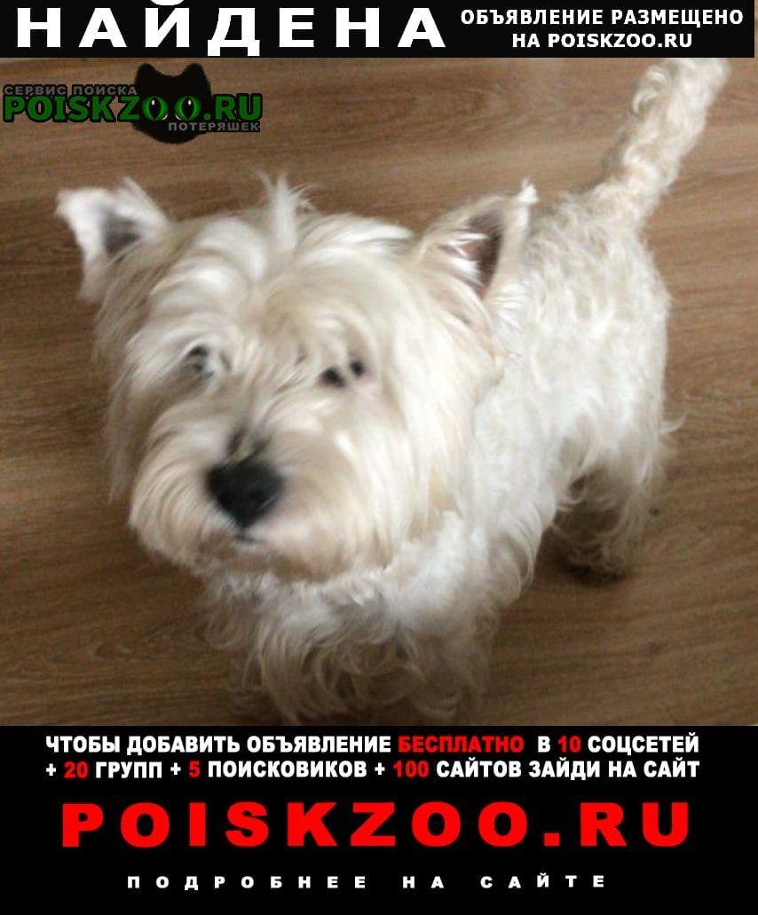 Найдена собака вест Москва