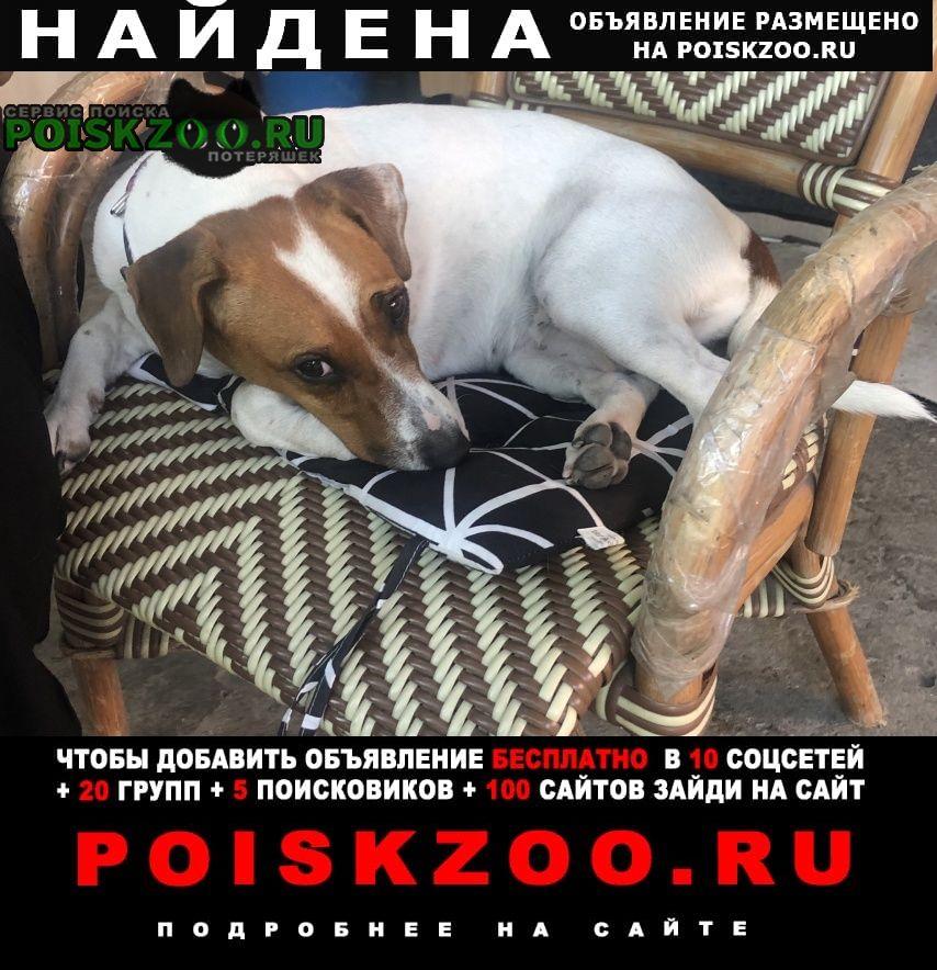 Найдена собака джек рассел девочка Новороссийск