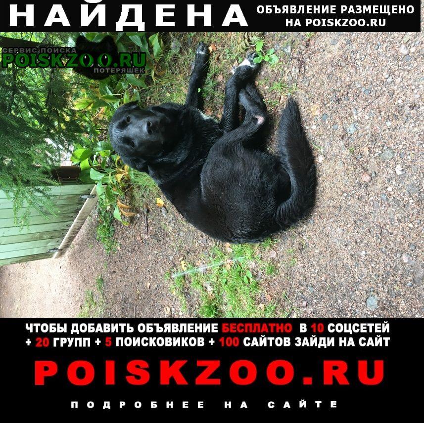Найдена собака чёрная Выборг