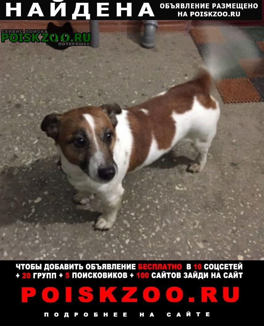 Найдена собака Тутаев