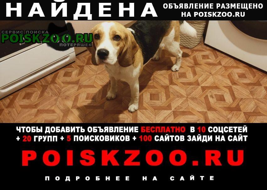 Найдена собака Кимры
