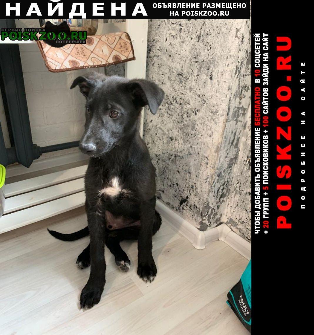 Найдена собака (девочка) Екатеринбург
